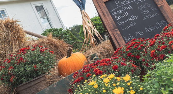 Autumn at Sweethill Farm